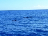 whales (3)