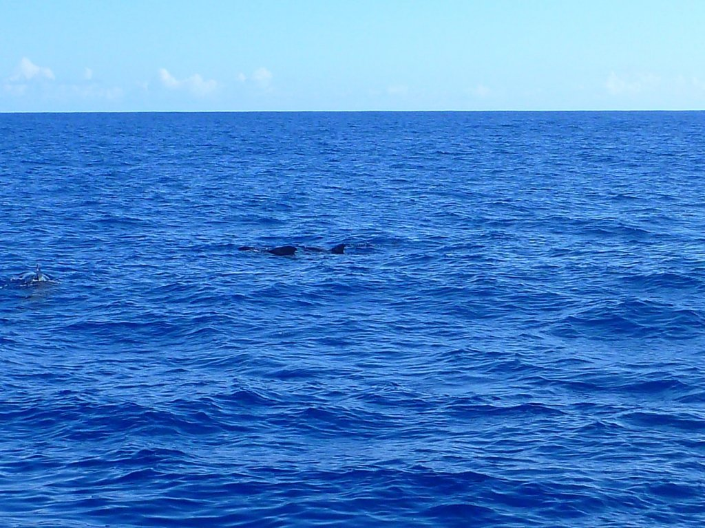 whales (2)