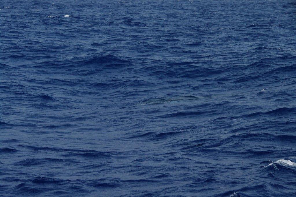Whale (11)