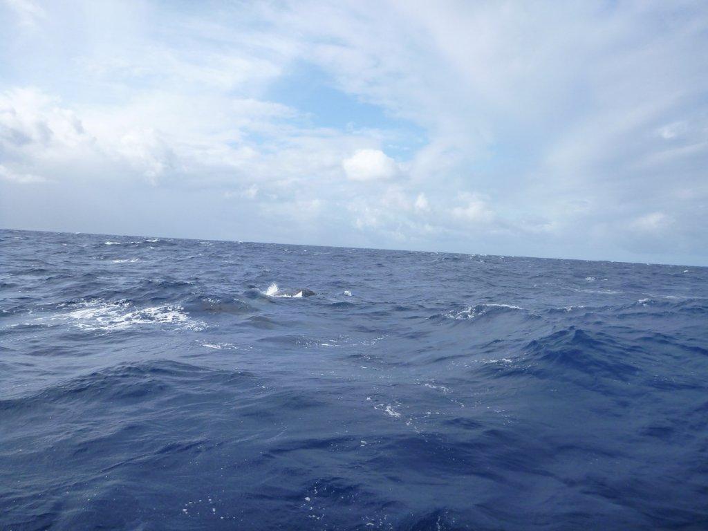 Whale (6)