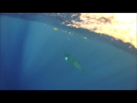 WhaleUW3