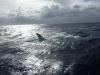 Whale (2)