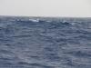 Whale (9)