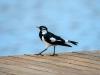 birds-0276
