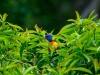 birds-1186