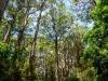 trees-0362