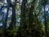 trees-0423