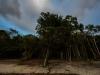 trees-0542