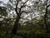 trees-0652