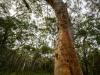 trees-0656