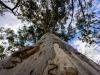 trees-0662