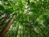 trees-0675