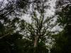 trees-0697