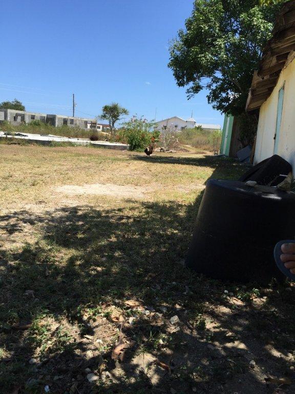 dry back yard
