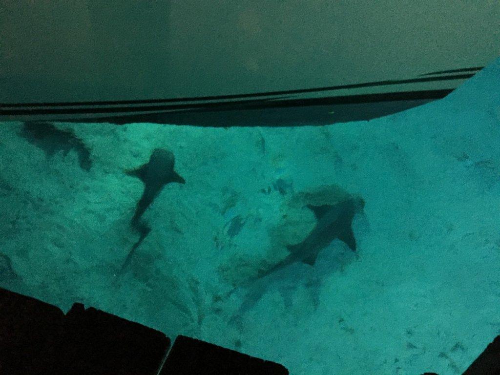 sharks (3)