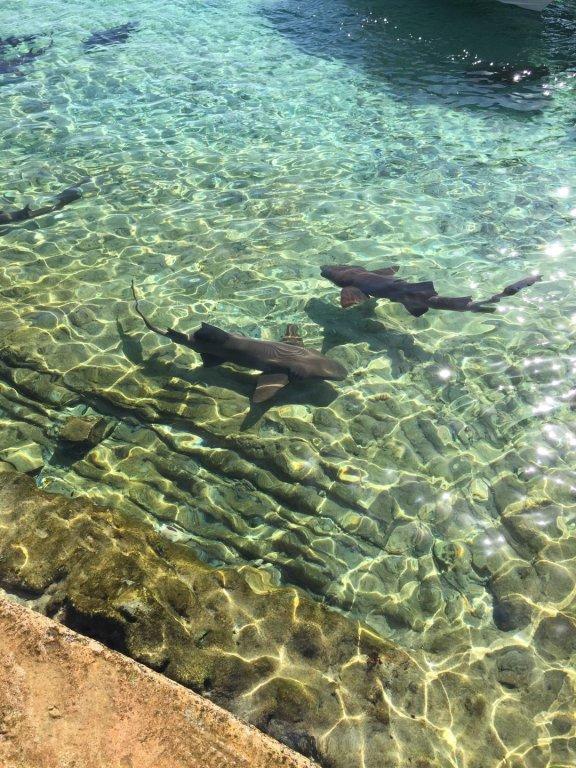 sharks (7)