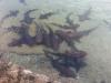 sharks (6)
