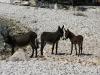 donkeys-4