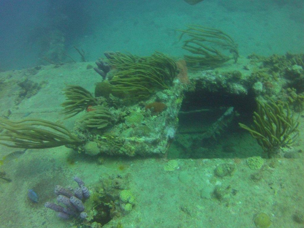 diving (11)