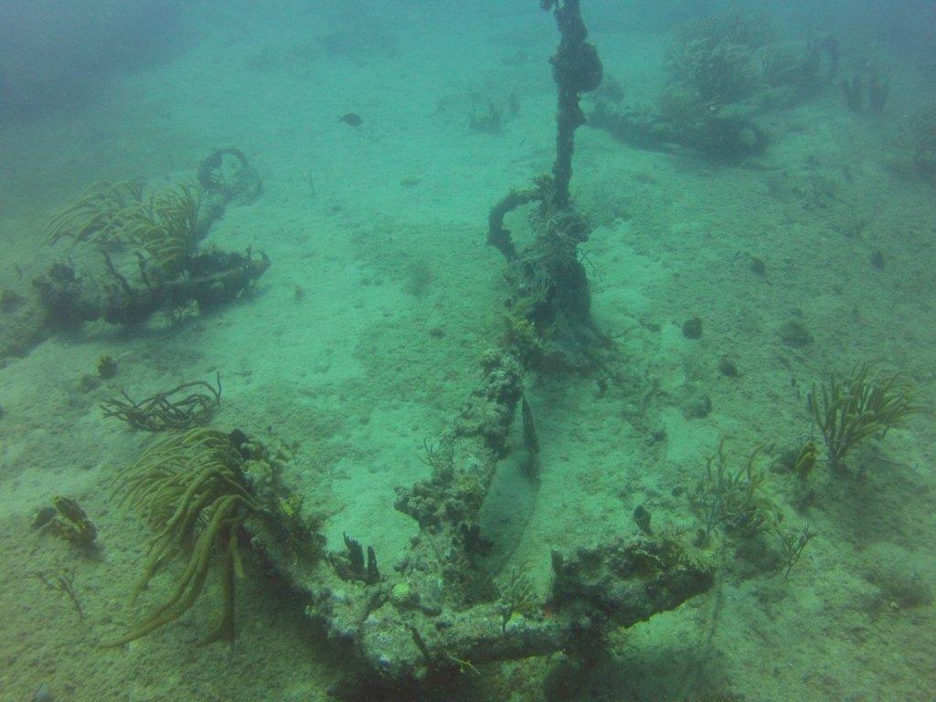 diving (13)