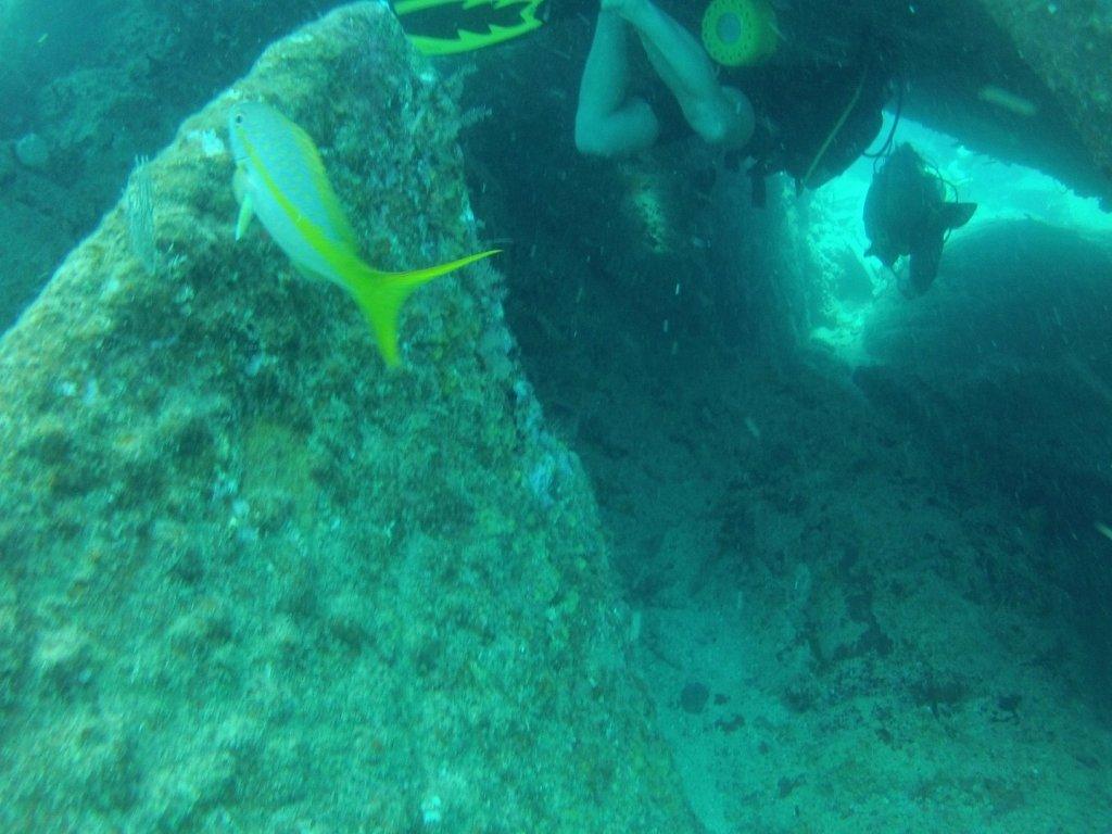 diving (30)