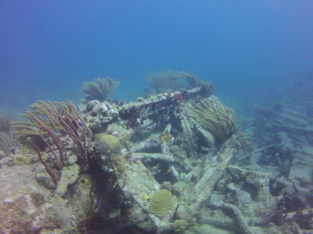 diving (39)