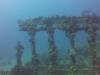 diving (10)