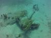 diving (16)