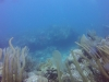 diving (21)