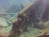 diving (27)