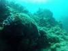 diving (32)
