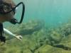 diving (12)