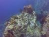 diving (37)