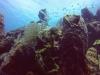 diving (50)