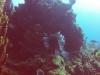 diving (51)