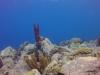 diving (59)