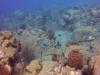 diving (61)
