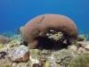 diving (62)