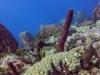 diving (64)