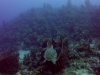 diving (68)
