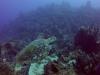 diving (69)