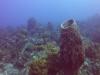 diving (71)