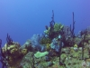 diving (72)