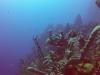 diving (73)