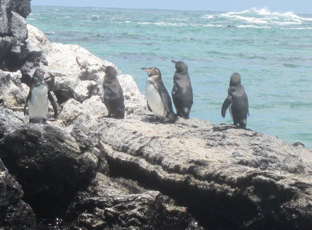 penguinos-large