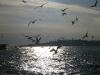 birds-again