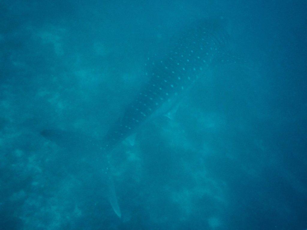 Maldives-15