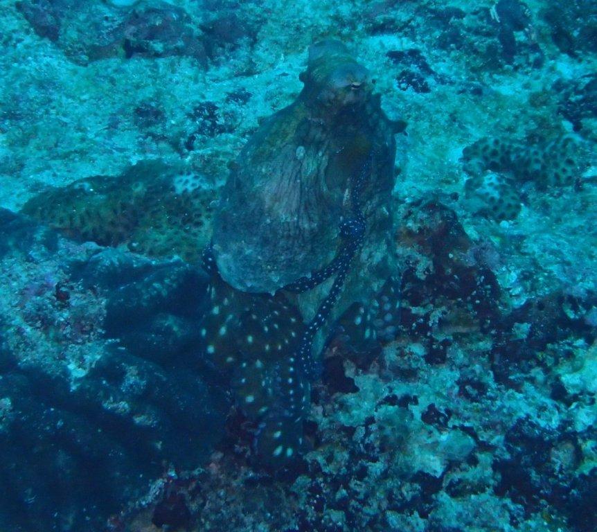 Maldives-163