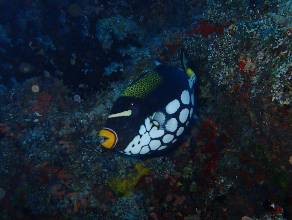 Maldives-174