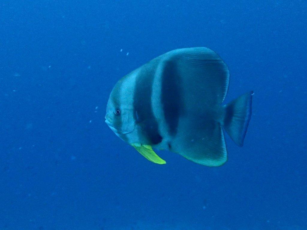 Maldives-177